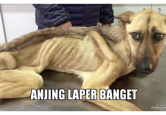 Meme Anjing 4 948cd