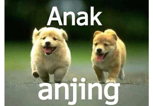 Meme Anjing 6 7fd7b