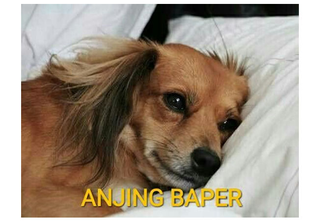 Meme Anjing 7 4d658