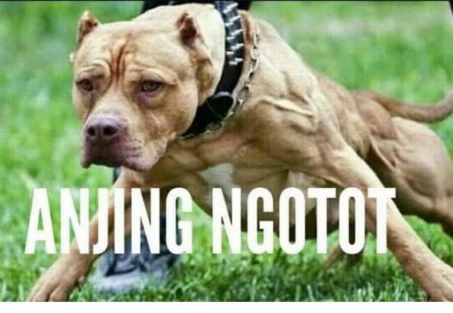 Meme Anjing 8 A6304