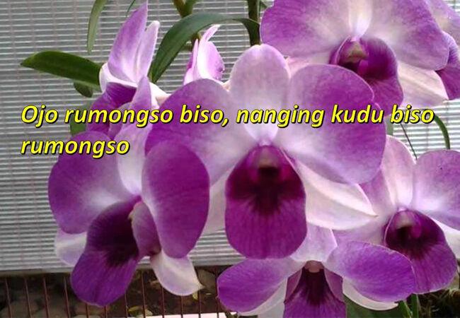 Kata Kata Lucu Bergambar Bahasa Jawa 3 745c8