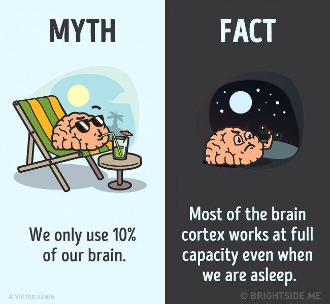 Mitos Fakta Tentang Tubuh Kita 1