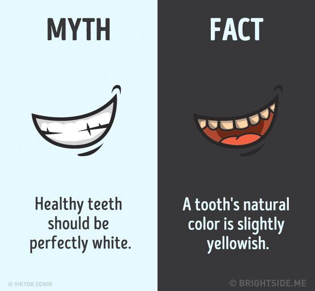 Mitos Fakta Tentang Tubuh Kita 11