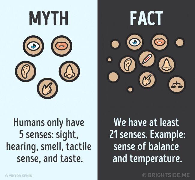 Mitos Fakta Tentang Tubuh Kita 5