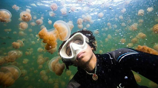 Jellyfish Lake B2808