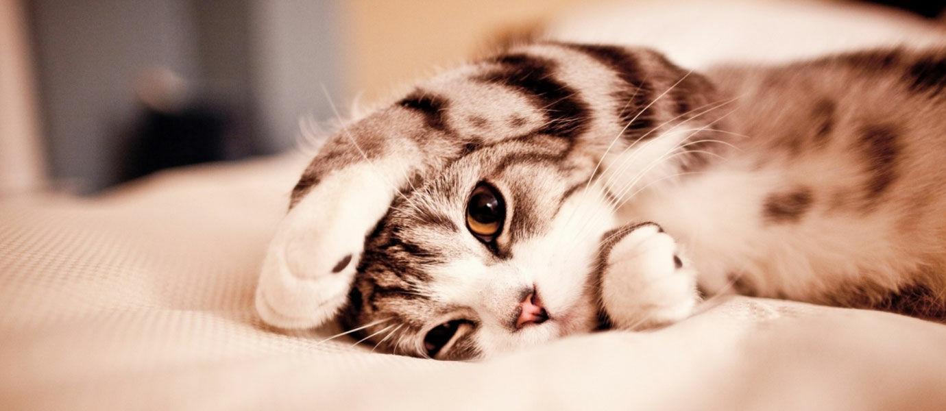 Alasan Ilmiah Kenapa Semua Orang Suka Melihat Foto Kucing