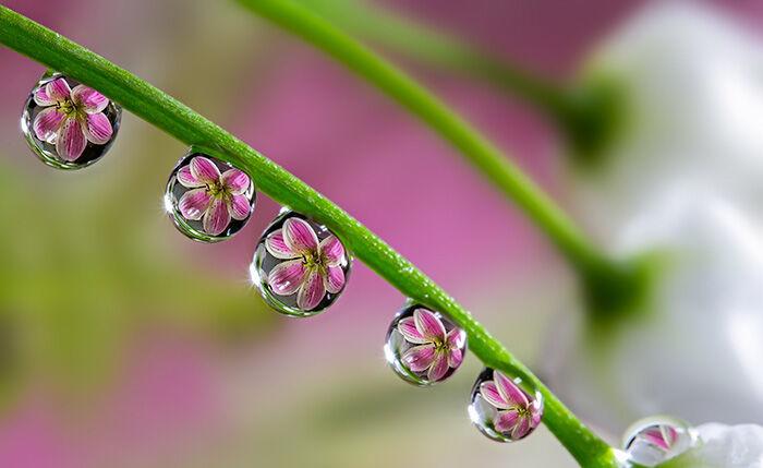 Indahnya Bunga Di Tetesan Air