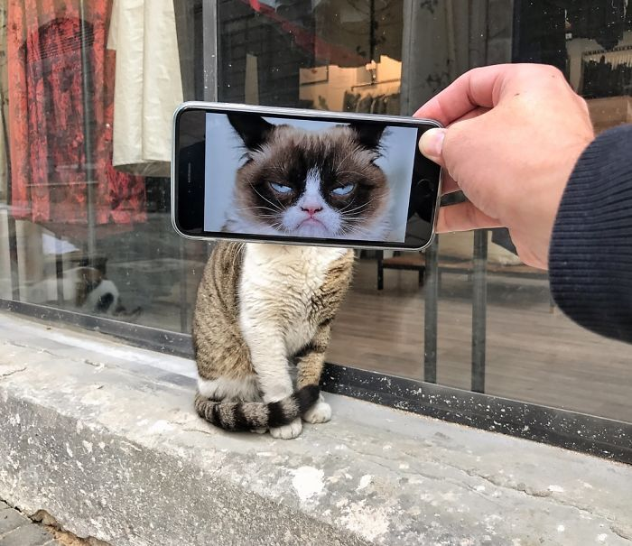 Kucing Si Muka Jahat