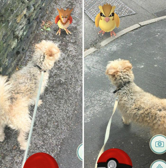 Pokemon Di Tempat Tak Terduga 13
