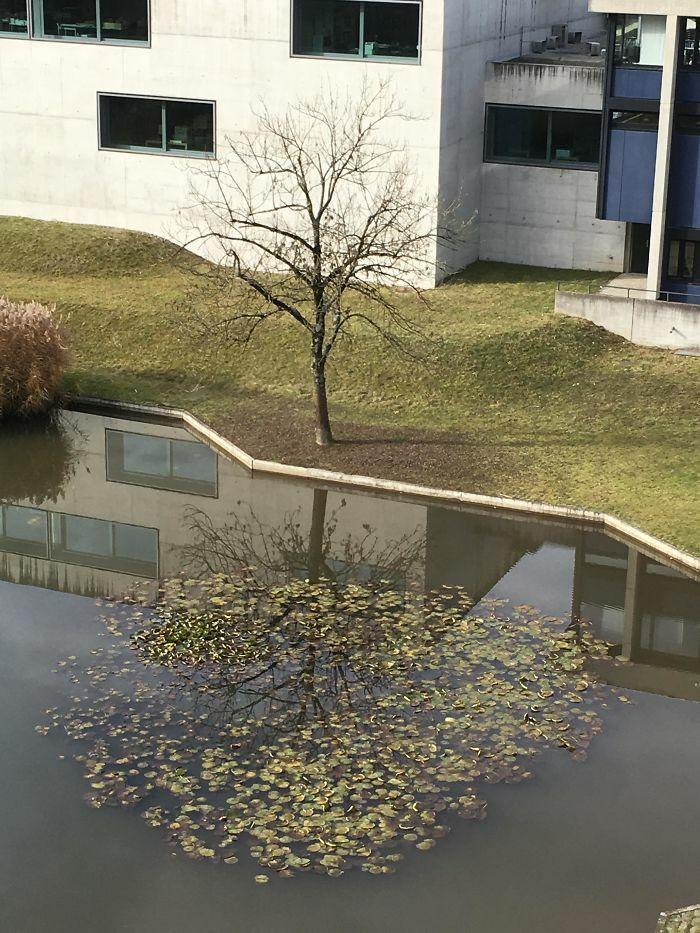Refleksi Ranting Pohon Yang Menyatu Dengan Dedaunan Di Air