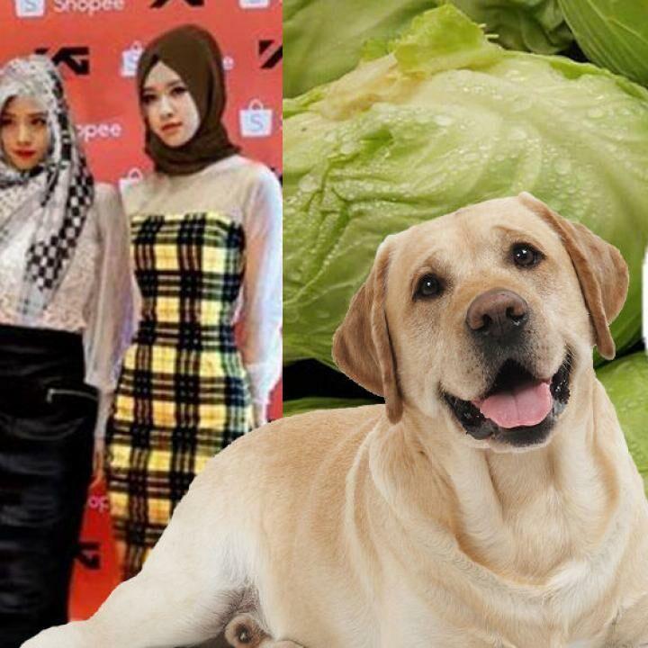 100+ Gambar Lucu Terbaru 2018 Bikin Ngakak Abis Terlihat Keren