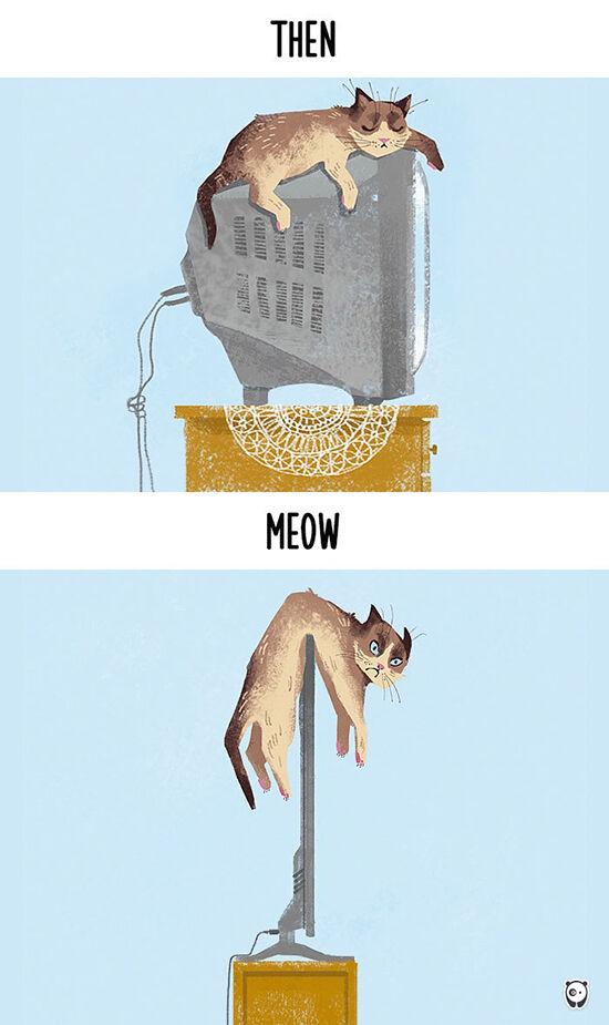 Begini Teknologi Mengubah Kehidupan Kucing 1