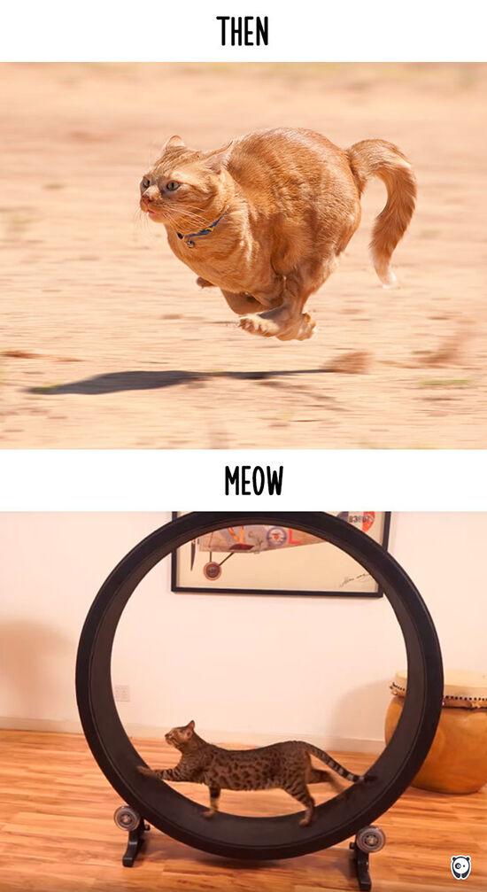 Begini Teknologi Mengubah Kehidupan Kucing 11