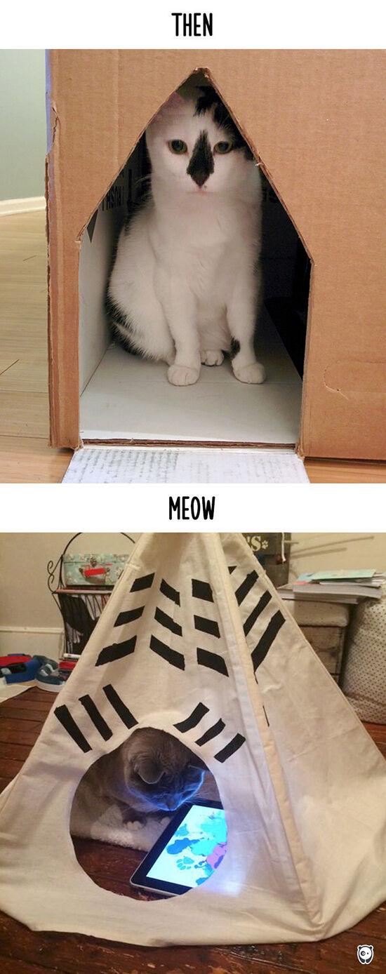 Begini Teknologi Mengubah Kehidupan Kucing 12