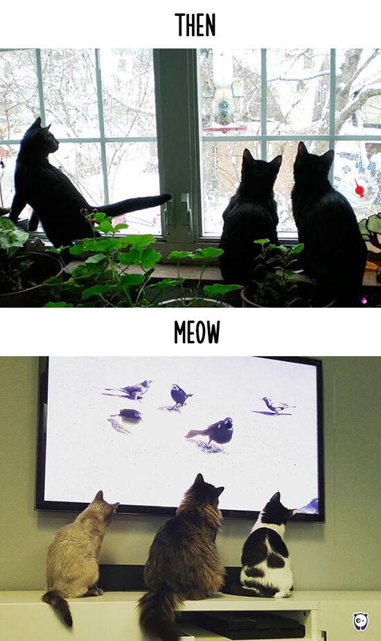 Begini Teknologi Mengubah Kehidupan Kucing 14