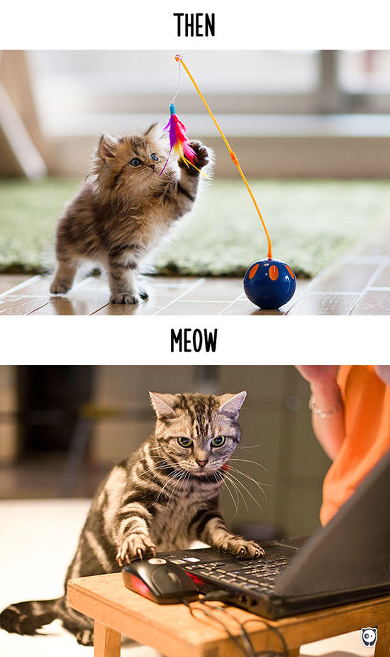 Begini Teknologi Mengubah Kehidupan Kucing 15