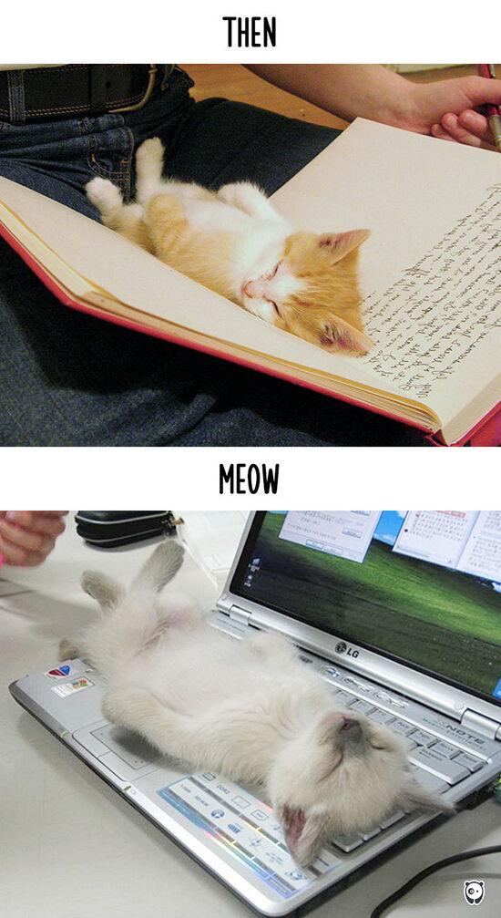 Begini Teknologi Mengubah Kehidupan Kucing 2