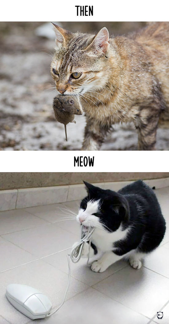 Begini Teknologi Mengubah Kehidupan Kucing 4