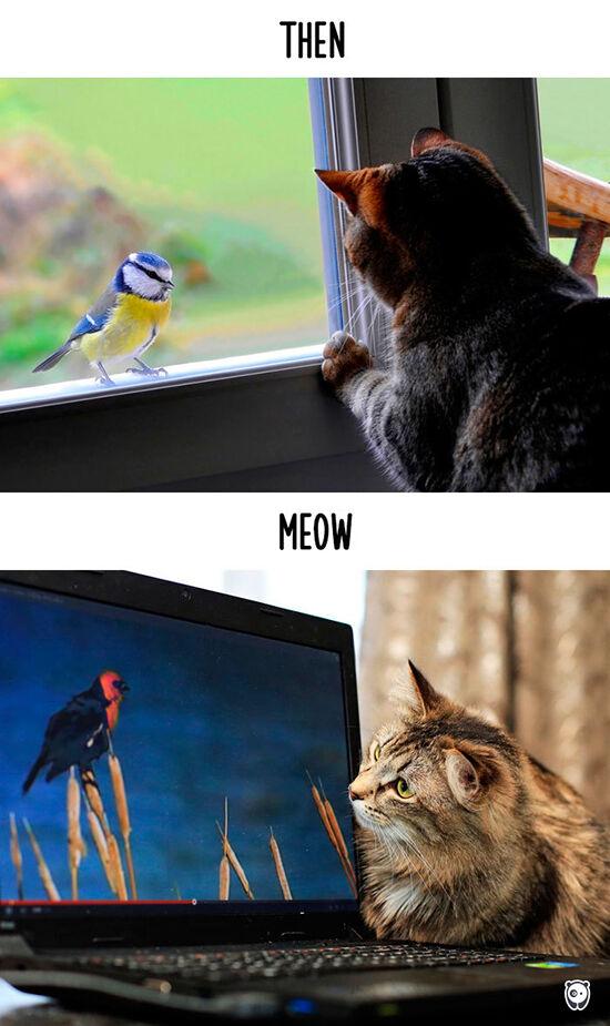 Begini Teknologi Mengubah Kehidupan Kucing 5