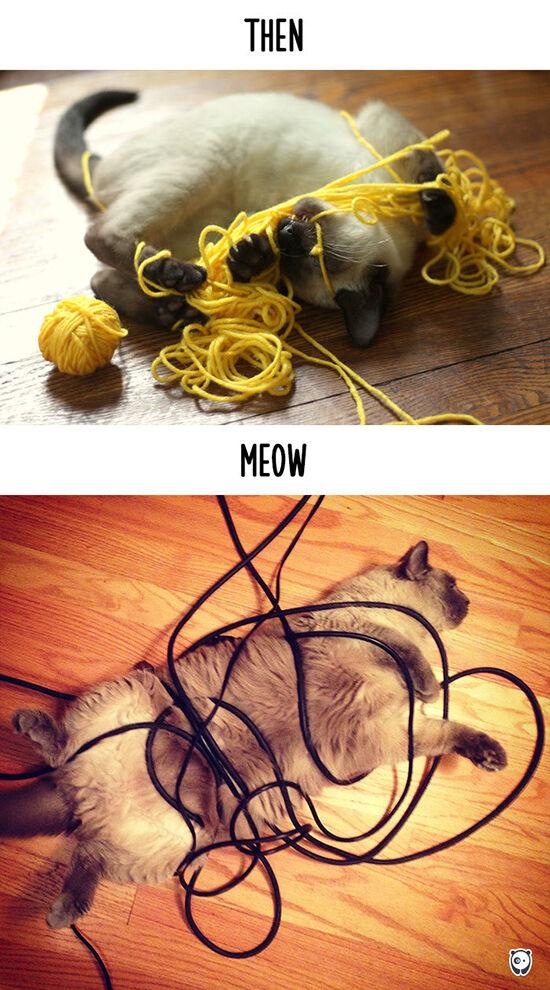 Begini Teknologi Mengubah Kehidupan Kucing 6