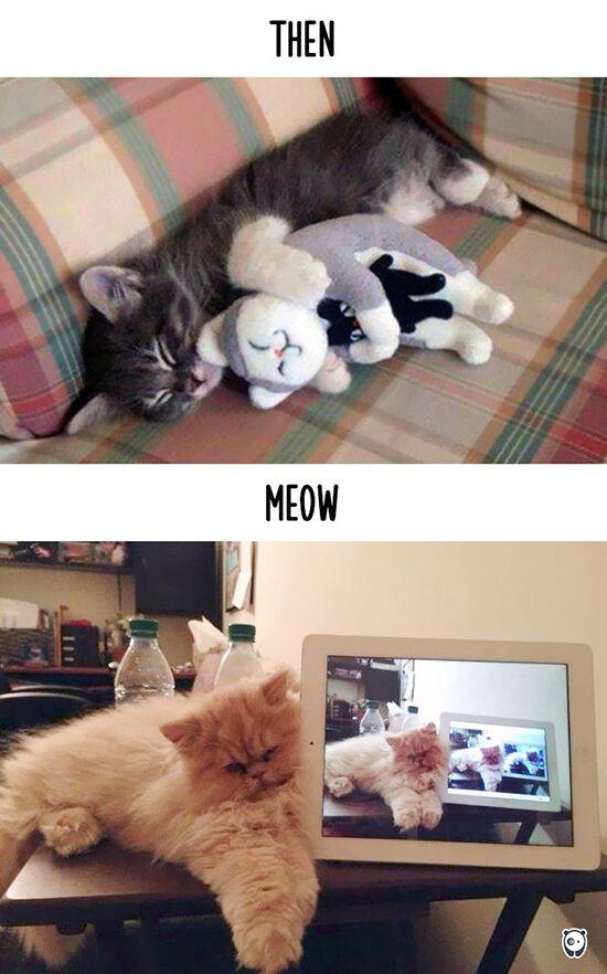 Begini Teknologi Mengubah Kehidupan Kucing 7