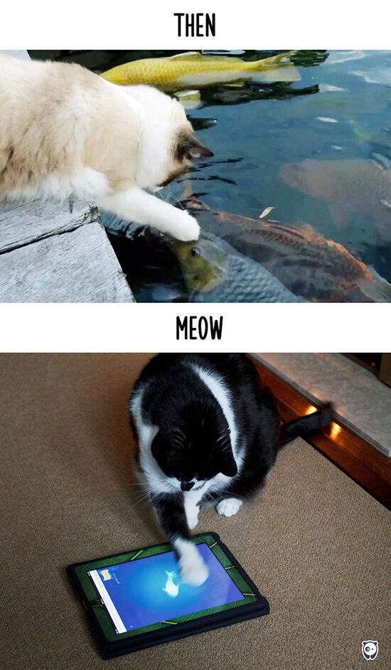 Begini Teknologi Mengubah Kehidupan Kucing 8