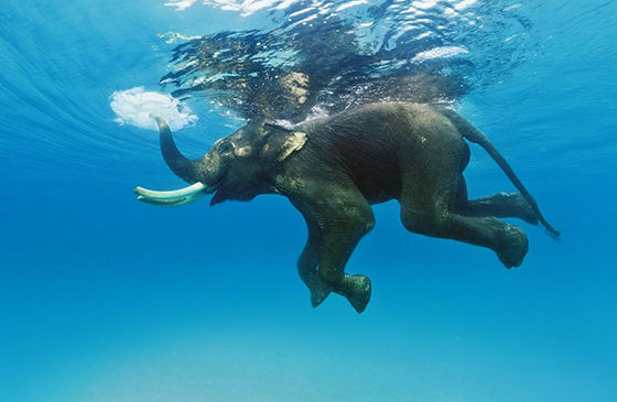 5 Foto Gajah