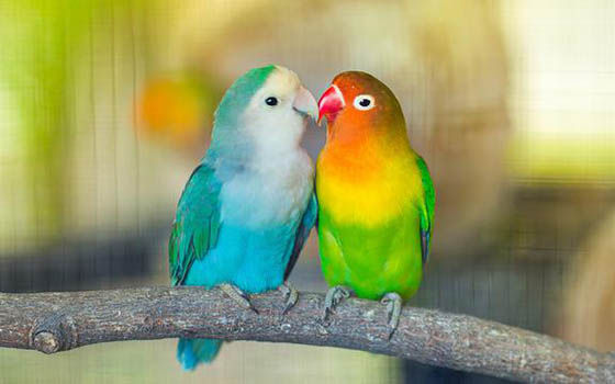Aplikasi Ktp Burung 03d4b