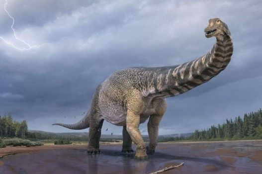 Fosil Dinosaurus Terbaru 9ede9