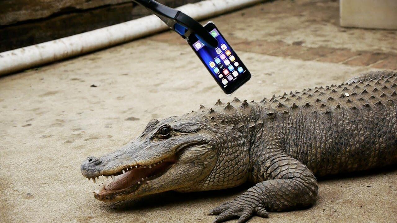 Iphone 7 Vs Aligator