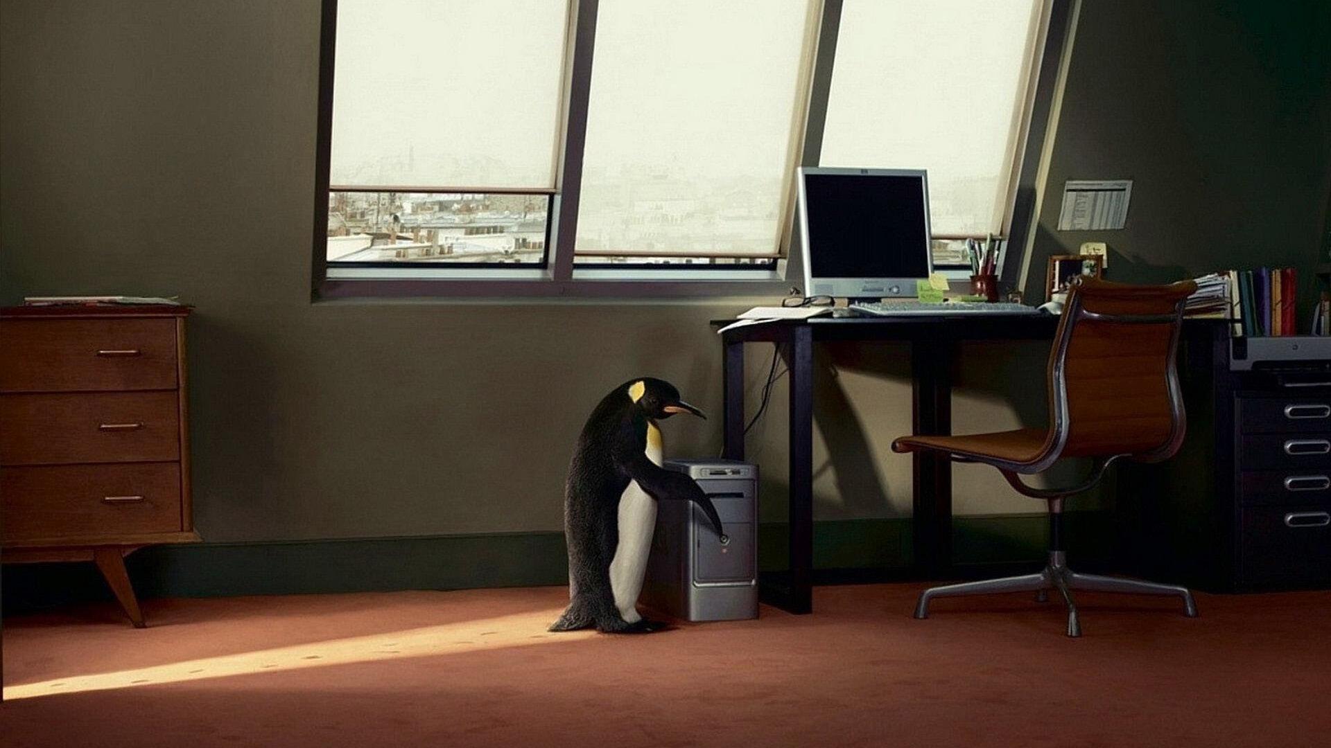 Home Penguin Linux Background