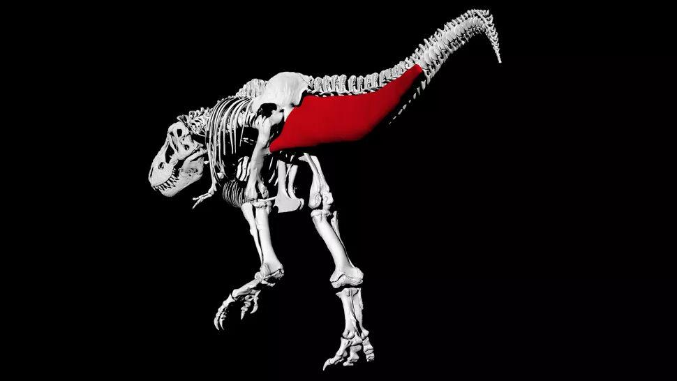 Rekonstruksi Tulang Dan Ligamen Digital T Rex Dceda