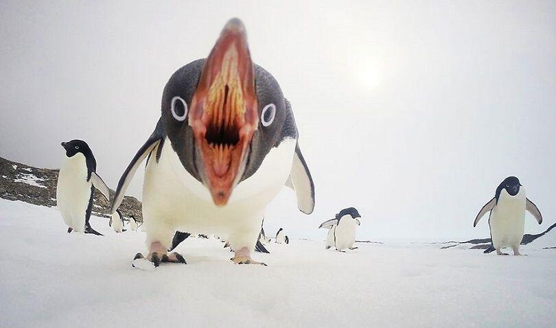 Foto Terbaik National Geographic 5