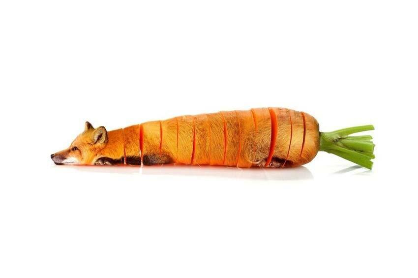 Photoshop Hewan Dan Sayuran 9