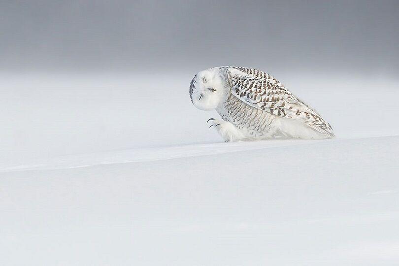 Foto Terbaik National Geographic 4