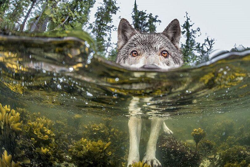 Foto Terbaik National Geographic 6