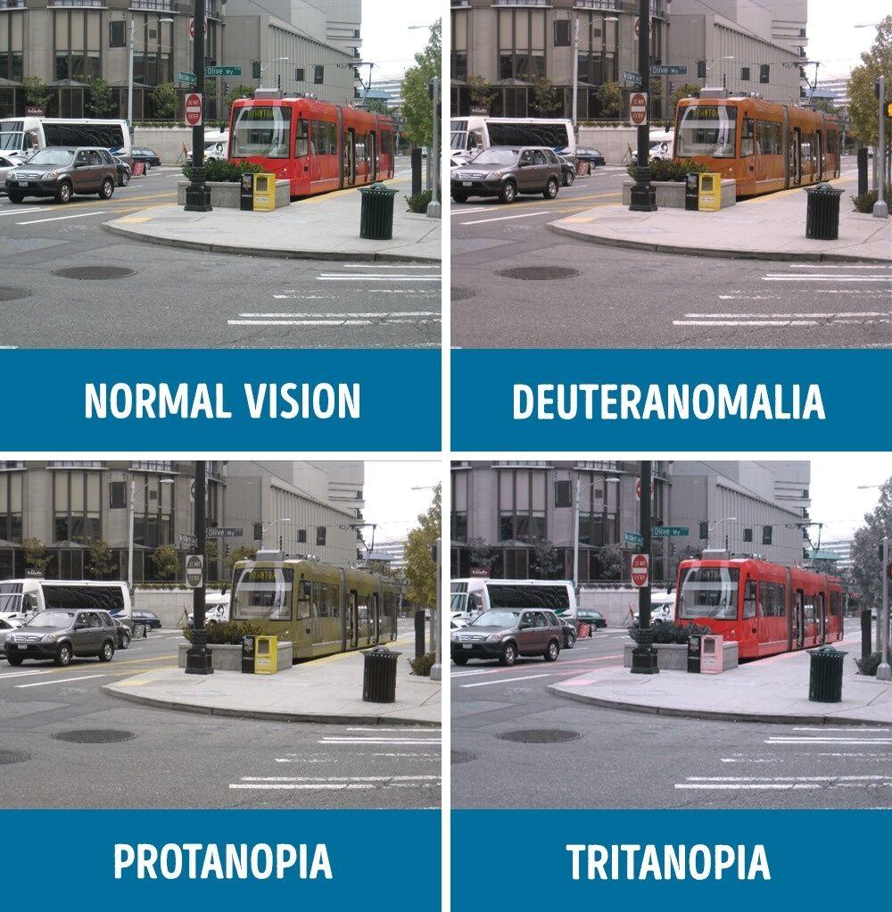 Perbandingan Mata Normal Dan Buta Warna 10