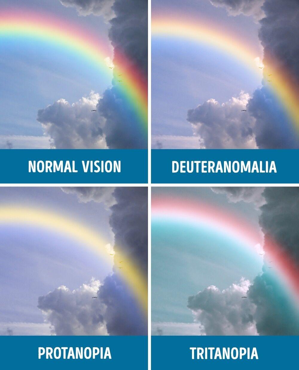 Perbandingan Mata Normal Dan Buta Warna 9