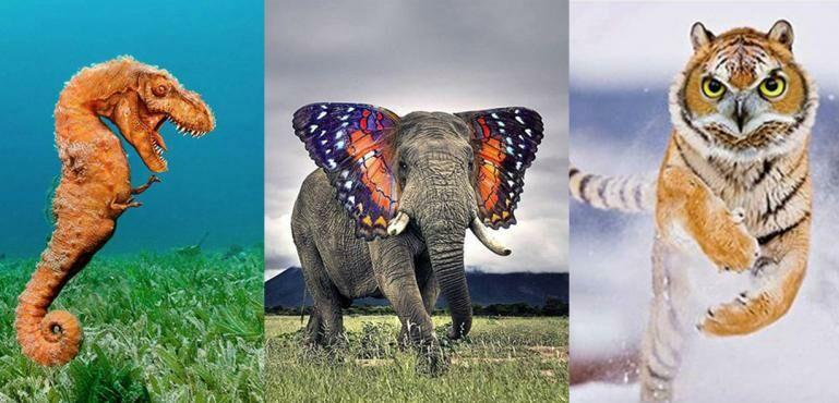Keren! Inilah 20 Foto Photoshop Gabungan Hewan yang Uniknya Kebangetan!
